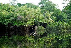 Aumenta el riesgo de extinción de especies de aves que habitan en el Amazonia
