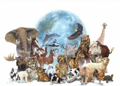 http://www.enextincion.com/wp-content/uploads/2013/01/Clasificaci%C3%B3n-de-las-especies-en-extinci%C3%B3n-391x280.jpg