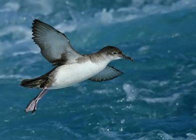 El proyecto Life Euro SAP peleará por la recuperación de aves