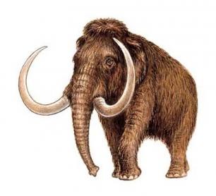 Insertan genes de mamut en elefante asiático vivo